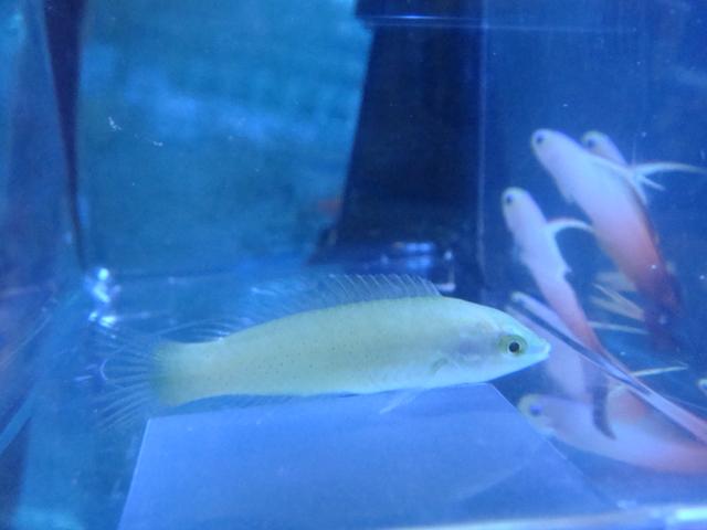 海水魚_f0189122_14155469.jpg