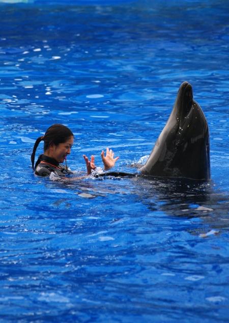 イルカに乗った少女~♪ 名古屋港水族館_d0145934_20432183.jpg