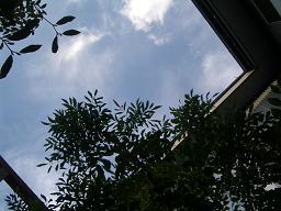 天空を見上げれば・・・・_c0152341_14303176.jpg