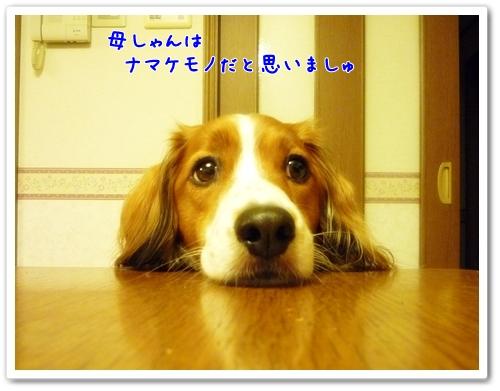 d0013149_9502745.jpg