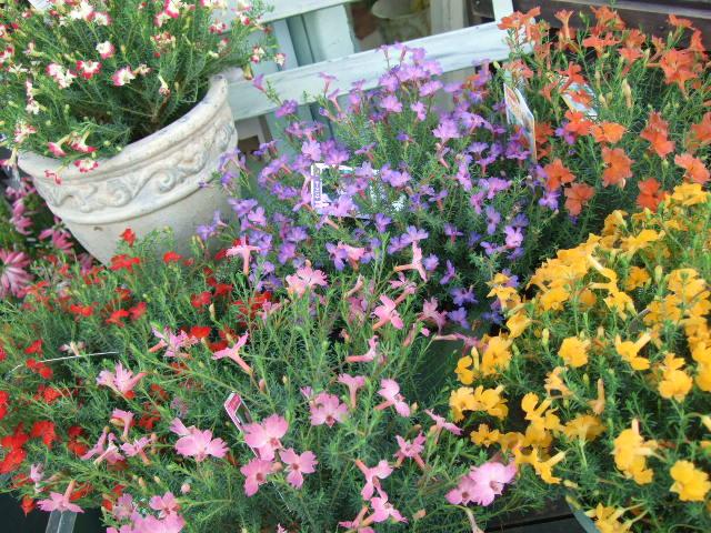 オークリーフ(透明感のある花たち)_f0049672_12255177.jpg