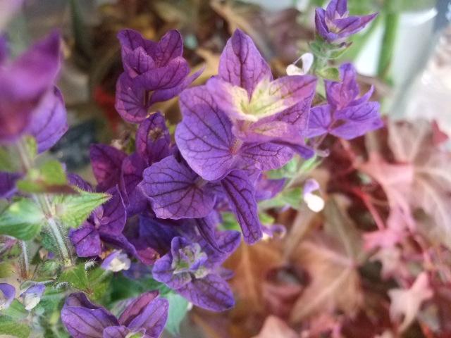 オークリーフ(透明感のある花たち)_f0049672_12291151.jpg