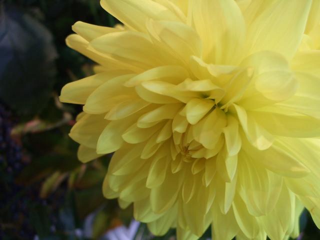 オークリーフ(透明感のある花たち)_f0049672_12291986.jpg