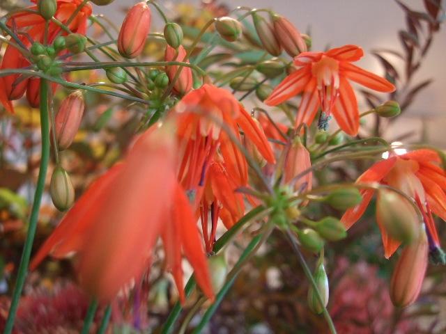 オークリーフ(透明感のある花たち)_f0049672_12292561.jpg