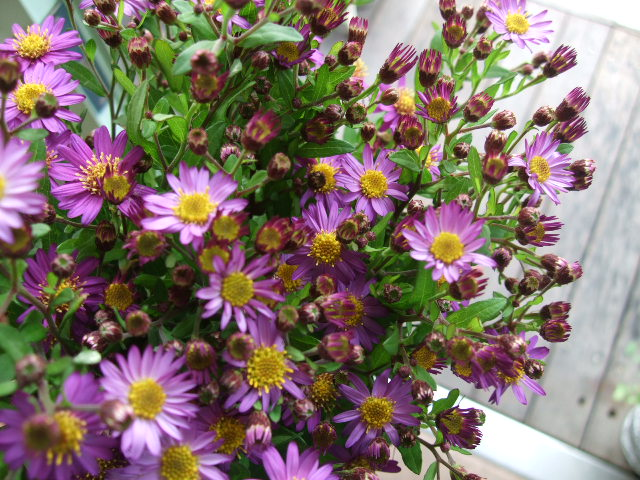 オークリーフ(透明感のある花たち)_f0049672_12294011.jpg