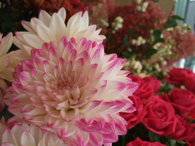 オークリーフ(透明感のある花たち)_f0049672_12294692.jpg