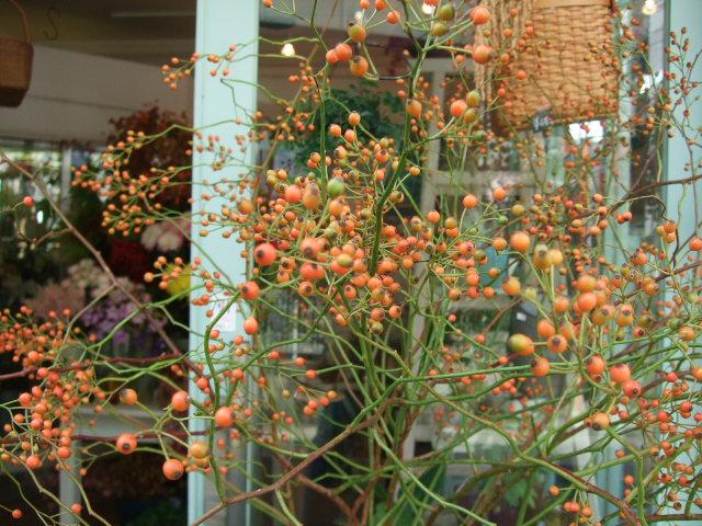 オークリーフ(透明感のある花たち)_f0049672_1229547.jpg