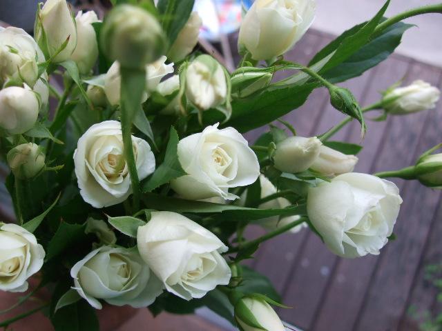 オークリーフ(透明感のある花たち)_f0049672_12302196.jpg