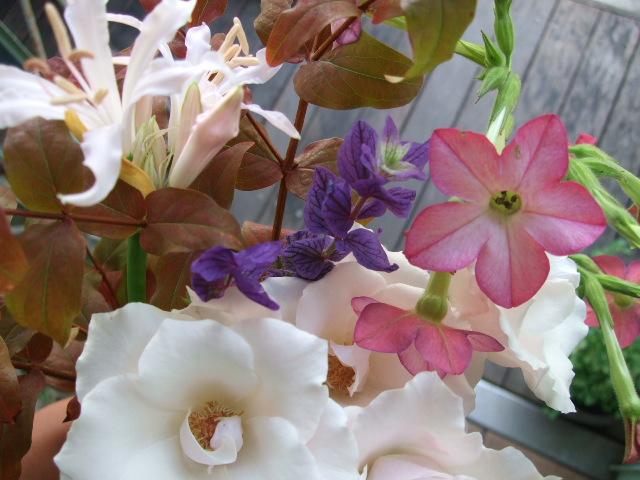 オークリーフ(透明感のある花たち)_f0049672_12451960.jpg