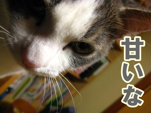 f0184675_1544418.jpg