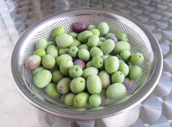 オリーブの収穫_b0107003_22582724.jpg