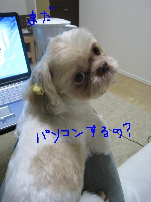 f0195809_224008.jpg