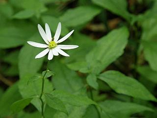 箱根湿性花園_c0025217_1158352.jpg