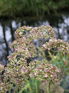 箱根湿性花園_c0025217_1242431.jpg