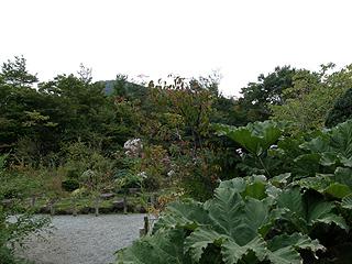 箱根湿性花園_c0025217_128182.jpg