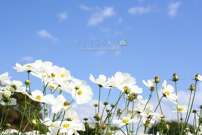 b0125038_18345421.jpg