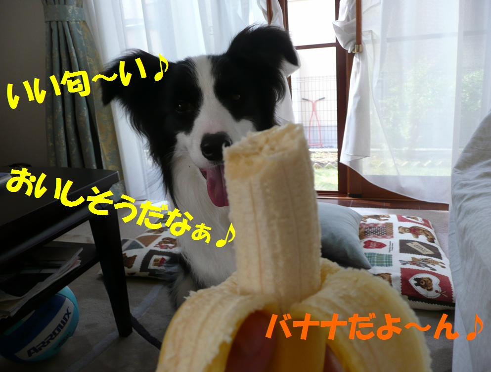 c0147241_091842.jpg