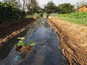 植え付けと収穫_c0063348_8232741.jpg