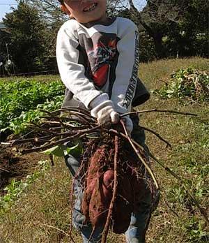 植え付けと収穫_c0063348_8234135.jpg