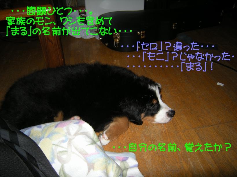 f0194048_737486.jpg