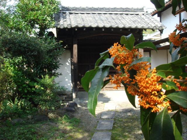 庭の金木犀_b0124462_19304068.jpg