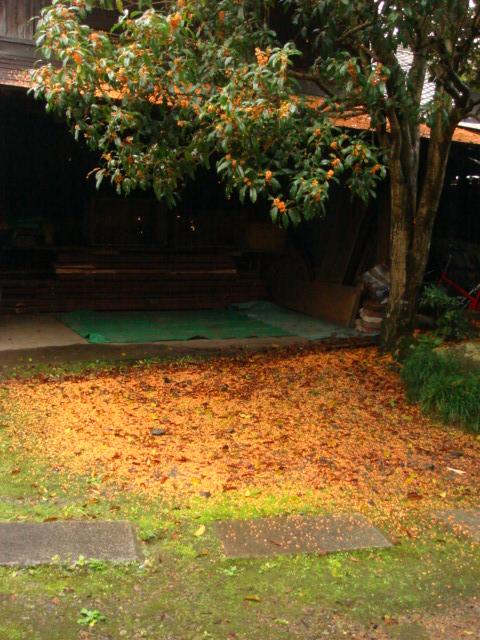 庭の金木犀_b0124462_19332862.jpg