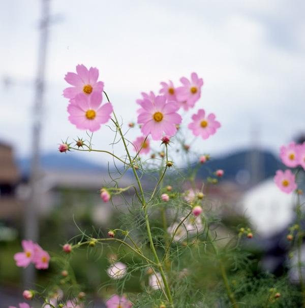 d0068664_2291455.jpg