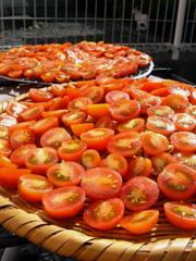 庭のミニトマトで、セミドライトマトを作ってみる_c0110869_221267.jpg