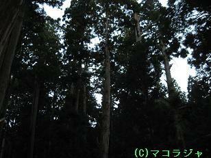 f0053077_14465.jpg