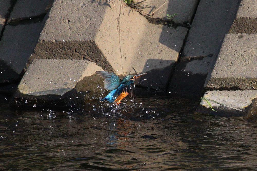 涼しいのに行水です/芝桜/満月_b0024798_4422254.jpg