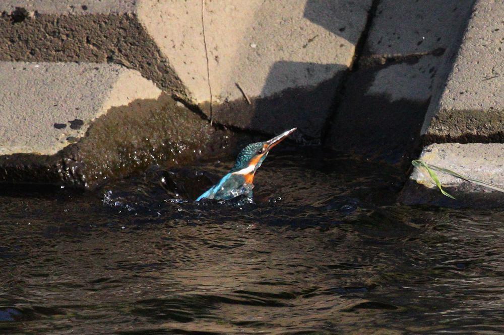 涼しいのに行水です/芝桜/満月_b0024798_4423220.jpg