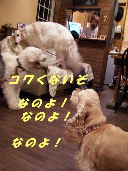 b0067012_22455755.jpg