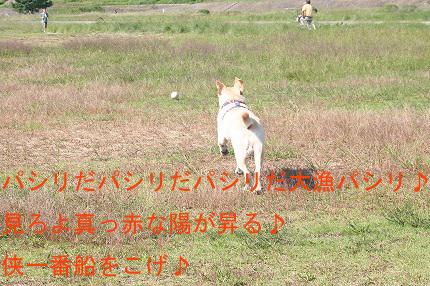 f0191413_18113551.jpg