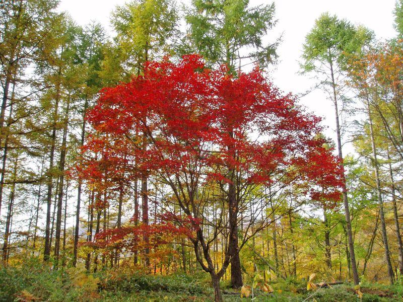 ピラタスの丘の紅葉_d0102327_21531780.jpg