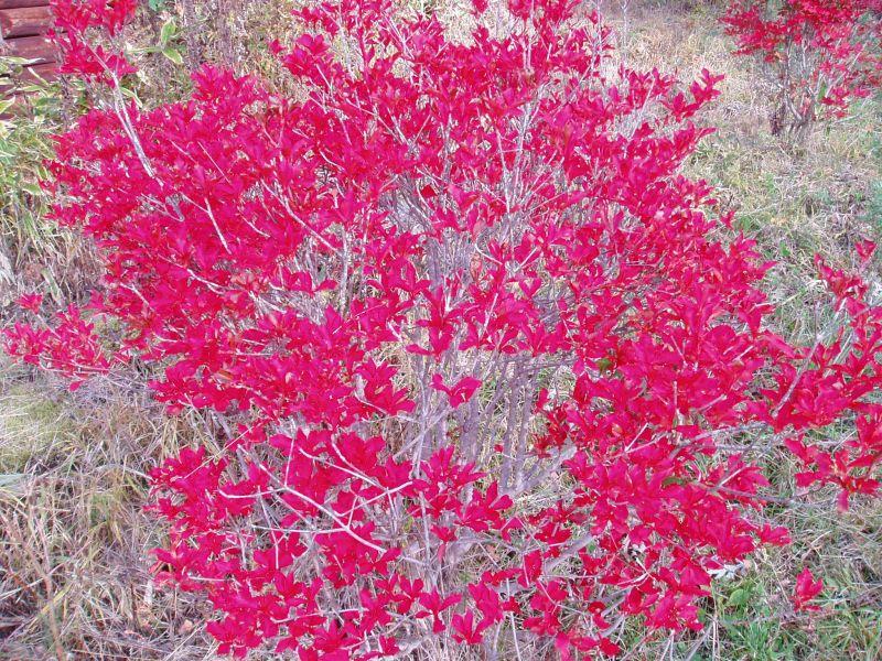 ピラタスの丘の紅葉_d0102327_21533984.jpg