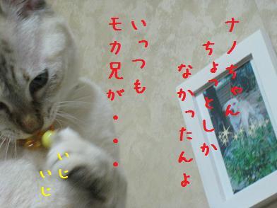 b0151748_12464336.jpg