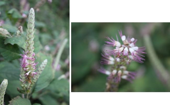 こんな花も。。。  <湿生花園>_c0118352_5433454.jpg