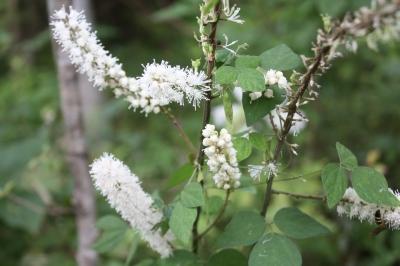 こんな花も。。。  <湿生花園>_c0118352_5451494.jpg