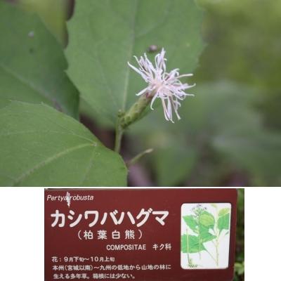 こんな花も。。。  <湿生花園>_c0118352_6115355.jpg
