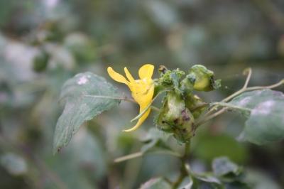 こんな花も。。。  <湿生花園>_c0118352_6242831.jpg