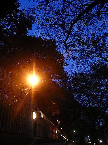 第21回東京国際映画祭スタート。。。* *。:☆.。† _a0053662_19333691.jpg