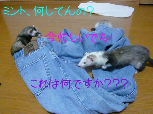 c0165472_345833.jpg