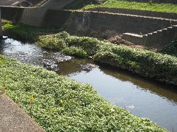 安達太良川の水生生物_a0087378_72472.jpg