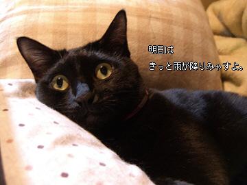d0065398_20123650.jpg