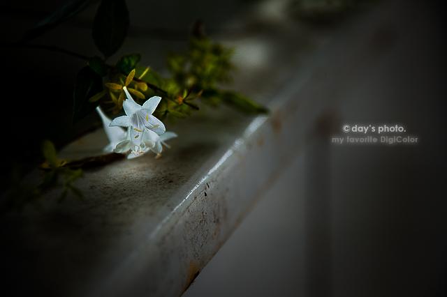 Mystic White_e0117517_12262650.jpg