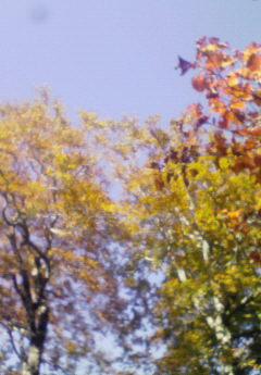 10月18日(土) ・・・ 紅葉をみおろす_f0101226_1293627.jpg