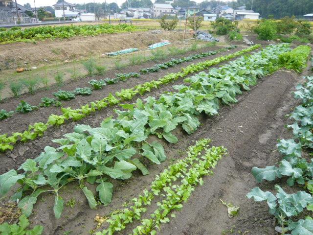 秋模様の神前農園と横やんのウマウマ♪「まかない」_b0077531_0492095.jpg