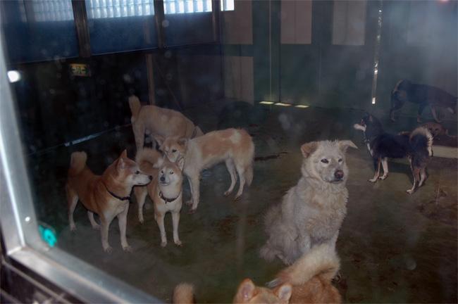 千葉県動物愛護センター_e0135972_04595.jpg