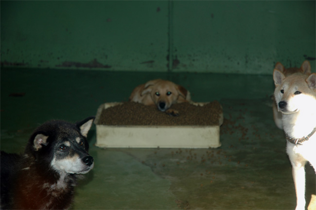 千葉県動物愛護センター_e0135972_061227.jpg