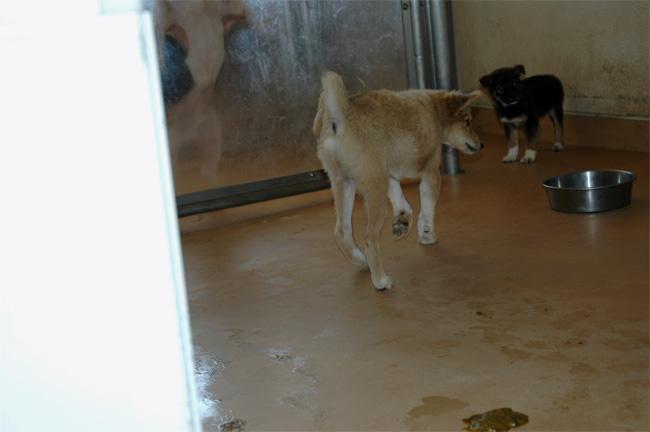 千葉県動物愛護センター_e0135972_12936.jpg